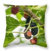 Ripe Mulberry On The Branches Throw Pillow