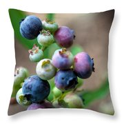 Ripening Blueberries Throw Pillow