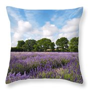 Ripening English Lavender In Hampshire Throw Pillow