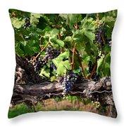 Ripening Grapes Throw Pillow