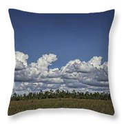 River Of Grass Throw Pillow by Anne Rodkin