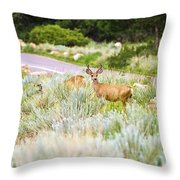 Roadside Buck Throw Pillow