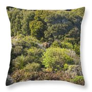Roadside Forest Scenery Throw Pillow