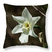 Roadside White Narcissus Throw Pillow