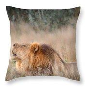 Roar Of The Kalahari Throw Pillow