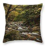Roaring Branch Brook Throw Pillow