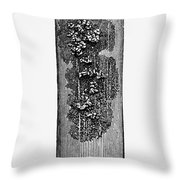 Robert Koch: Bacilli, 1890 Throw Pillow