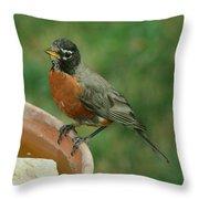 Robin 1 Throw Pillow