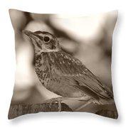Robin Bird Black And White Throw Pillow