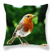 Robin Bird Photograph Throw Pillow