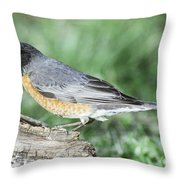 Robin Eating Mealworm Throw Pillow