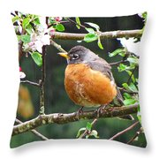 Robin In Apple Tree Throw Pillow