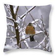 Robin In Snow Throw Pillow