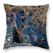 Rock Crab At He'eia Kea Pier Throw Pillow