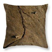 Rock Hydrax   #1087 Throw Pillow