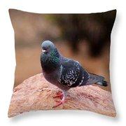 Rock Pigeon 030515 A Throw Pillow