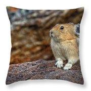 Rock Rabbit Throw Pillow