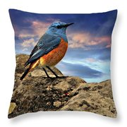 Rock Thrush Throw Pillow