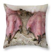 Rockhopper Penguin Feet Throw Pillow