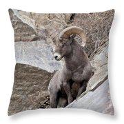 Rocky Mountain Big Horn Sheep Ram Throw Pillow
