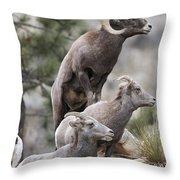 Rocky Mountain Big Horns Throw Pillow