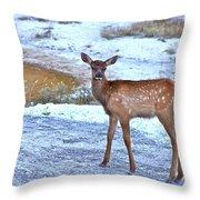 Rocky Mountain Elk Calf Throw Pillow