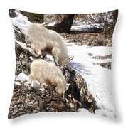 Rocky Mountain Goats - Mother And Baby Throw Pillow