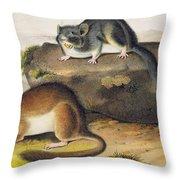 Rocky Mountain Neotoma Throw Pillow