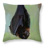 Rodrigues Flying Fox Throw Pillow