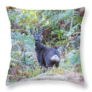 Roe Buck In Woodland Throw Pillow
