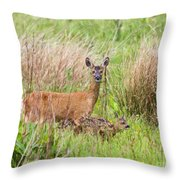 Roe Deer Capreolus Capreolus With Two Fawns Throw Pillow