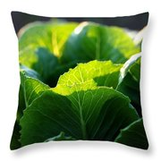 Romaine Study Throw Pillow by Angela Rath