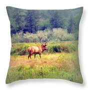 Roosevelt Bull Elk Throw Pillow