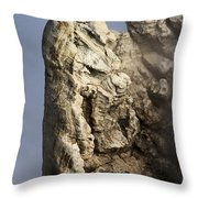 Roosevelt Geyser Throw Pillow