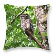 Roosting Owl Throw Pillow