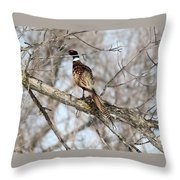 Roosting Rooster Throw Pillow
