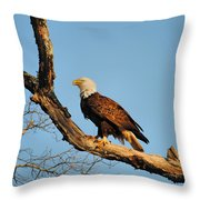 Roosting Tree 2 Throw Pillow