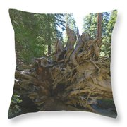 Roots Throw Pillow by Barbara Snyder