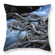 Roots Over Ozark Stream Throw Pillow