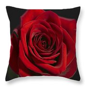 Rose 11 Throw Pillow