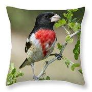 Rose-breasted Grosbeak Throw Pillow