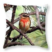 Rose-breasted Grosbeak On Pine Tree Throw Pillow