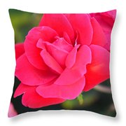 Rose Bush Throw Pillow
