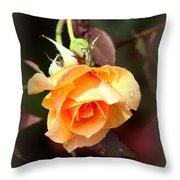 Rose - Flower - Card Throw Pillow
