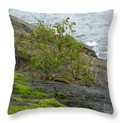 Rose Hip Bush Throw Pillow