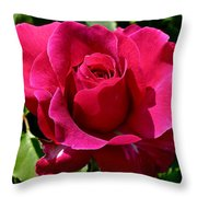 Rose In Bloom Throw Pillow