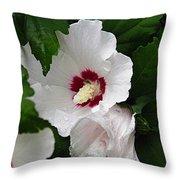 Rose Of Sharon Throw Pillow