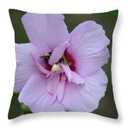 Rose Of Sharon With Bee Throw Pillow