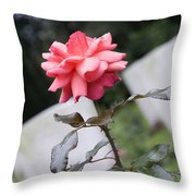 Rose On The Airborne War Cemetery Oosterbeek Netherlands Throw Pillow