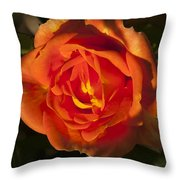 Rose Orange Throw Pillow